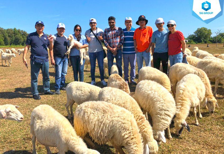 Công ty Tetra Park tại nông trại cừu Vũng Tàu