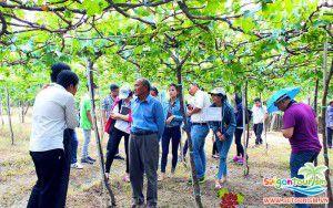 Ông chủ vườn nho Ba Mọi đang cùng đoàn khách tham quan Saigontourism