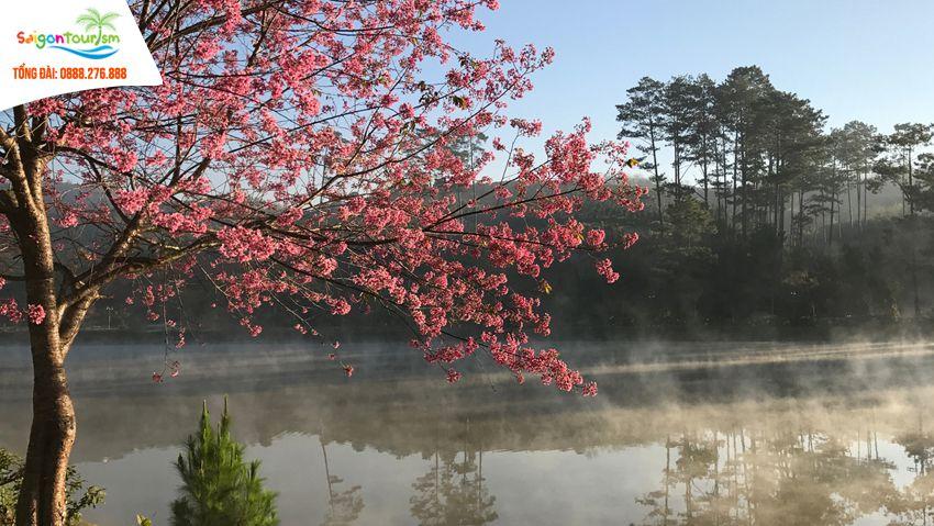hồ sinh thái Dasar